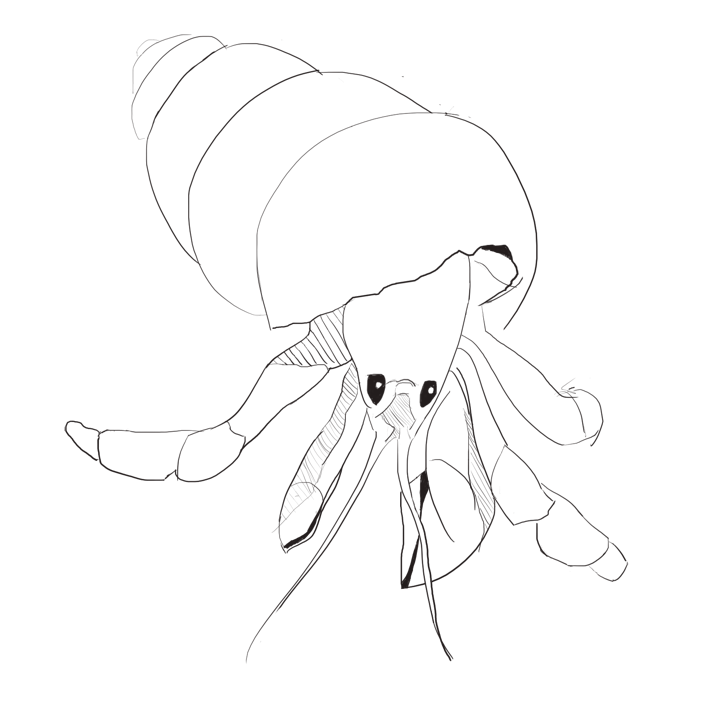 Incomplete hermit crab