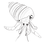 The rest of the hermit crab
